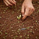 Del huerto urbano al huerto ecológico: un salto de calidad