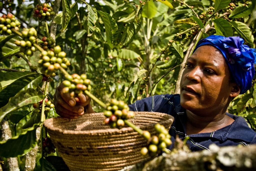 café-uganda 3