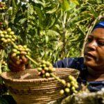 Coordinadora Estatal de Comercio Justo: 31 organizaciones por un comercio alternativo y solidario