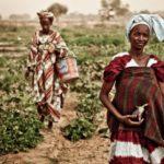 ONG internacionales: líneas de actuación