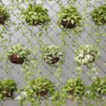 Cómo hacer un huerto urbano: descarga nuestra guía gratuita
