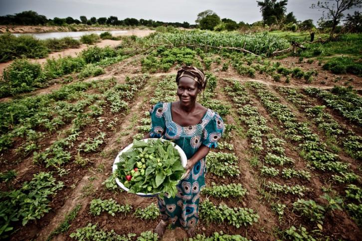 Demba Jibo en su parcela de vegetales y hortalizas. © Pablo Tosco/Intermón Oxfam