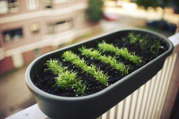 Cualquier lugar es bueno para plantar. iStock © kevinruss