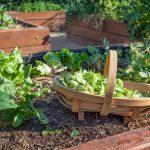 Crea tu huerto ecológico y disfruta de todos sus beneficios