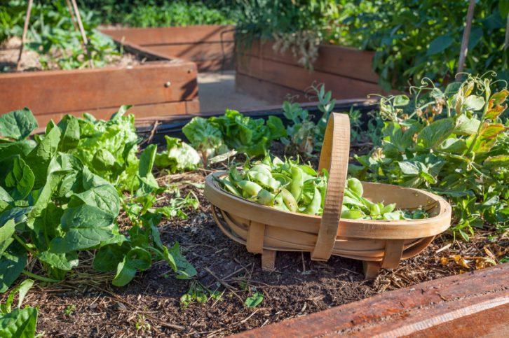 Crea tu huerto ecol gico y disfruta de todos sus beneficios ingredientes que suman - Pequeno huerto en casa ...