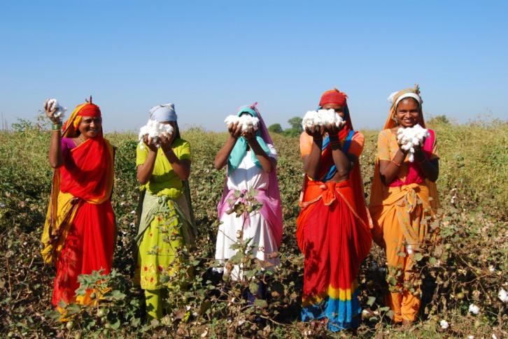 © Chetna Organic Association Trabajadoras de Chetna Organic Association recogiendo algodón orgánico