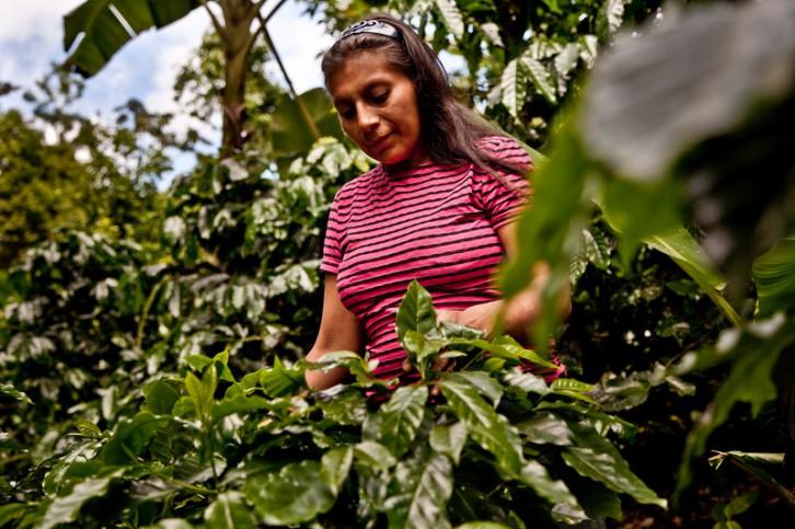 Victoria García Aldilla realizando trabajos de limpieza en su parcela de café © Pablo Tosco/Oxfam Intermón