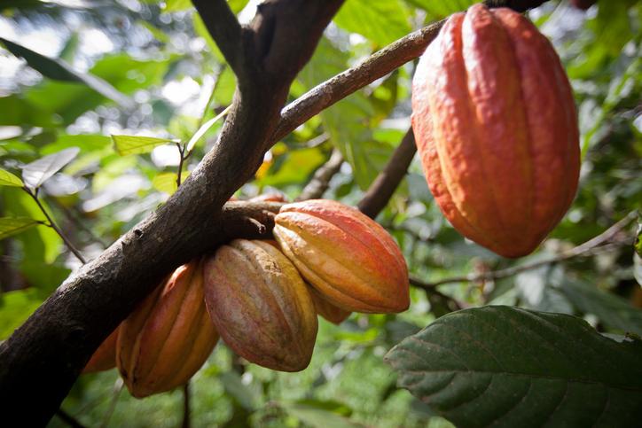 """""""ejemplo-desarrollo-sostenible-cacao-ghana"""""""