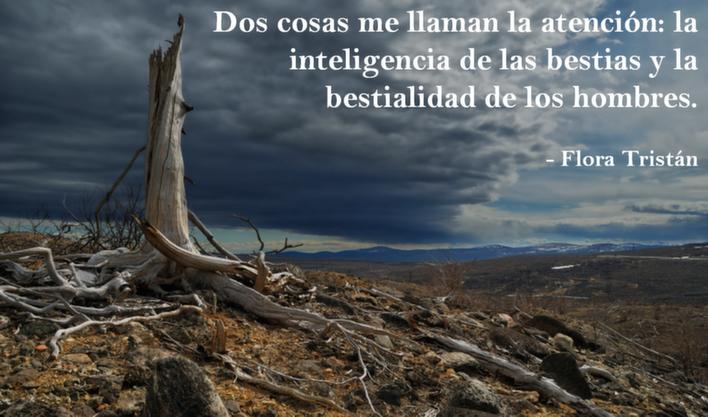 Las 5 Frases Más Inspiradoras Sobre Medio Ambiente