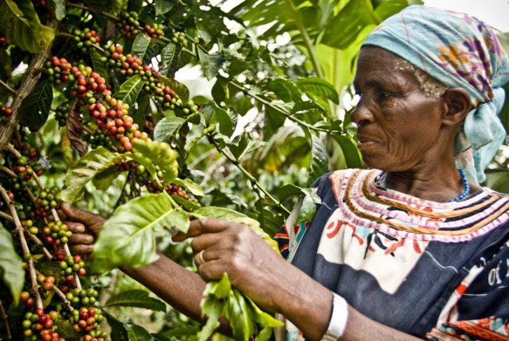 comercio-justo-cafe-uganda