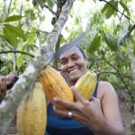 Descubriendo el cacao a través del mousse de chocolate