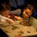 Planes con niños y niñas en Madrid para aprender y reflexionar sobre el medioambiente