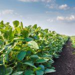 Alimentación ecológica para la salud