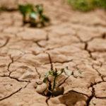 4 prácticas de desarrollo sostenible que cuidan la tierra
