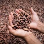 La mejor tarta de chocolate: con cacao <i>auténtico</i> y de Comercio Justo