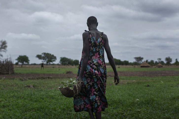 En esta temporada, previa a la estación de lluvias, Nyantuc va al campo a recoger hojas, como hace la mayoría de la población. Durante 3 o 4 meses comen hojas y frutos silvestres. Los afortunados lo acompañan con algo de sorgo, cacahuete... No tienen nada más.
