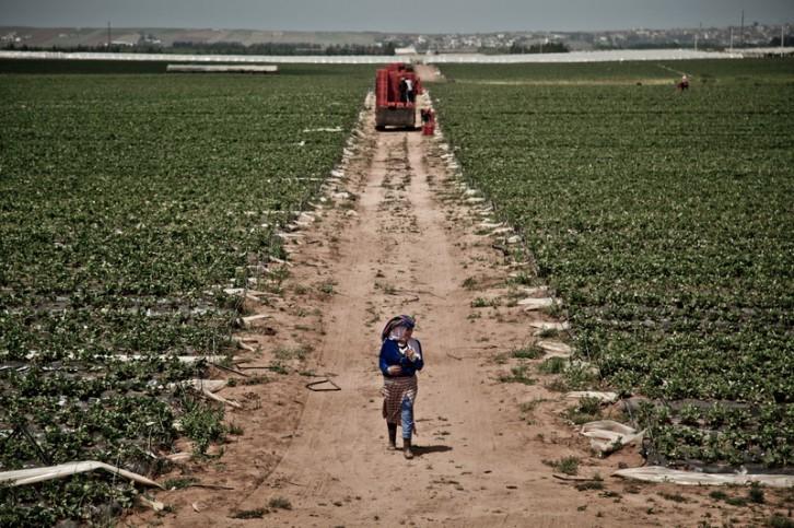 trabajadoras-fresas-marruecos