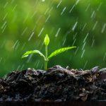 Los 5 usos del agua de lluvia