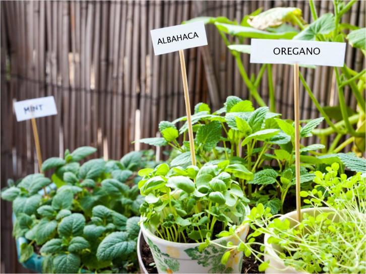 Por Qué Decir Sí A Los Huertos Ecológicos Ingredientes Que Suman