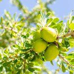 La naturalidad del aceite de argán