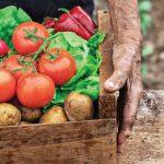 Comer bien: salud, bienestar y desarrollo sostenible