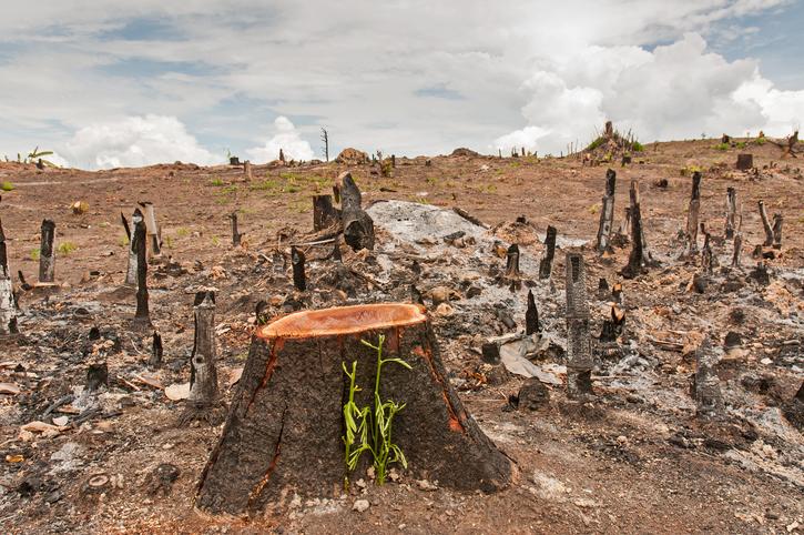 5 problemas ambientales actuales | Ingredientes que Suman