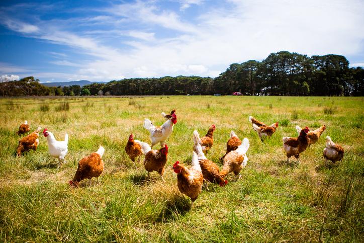 comer-bien-ecologico-organico