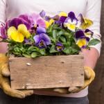 Ideas para reciclar 2 tipos de cajas de madera