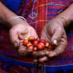 Dietas equilibradas con productos de Comercio Justo