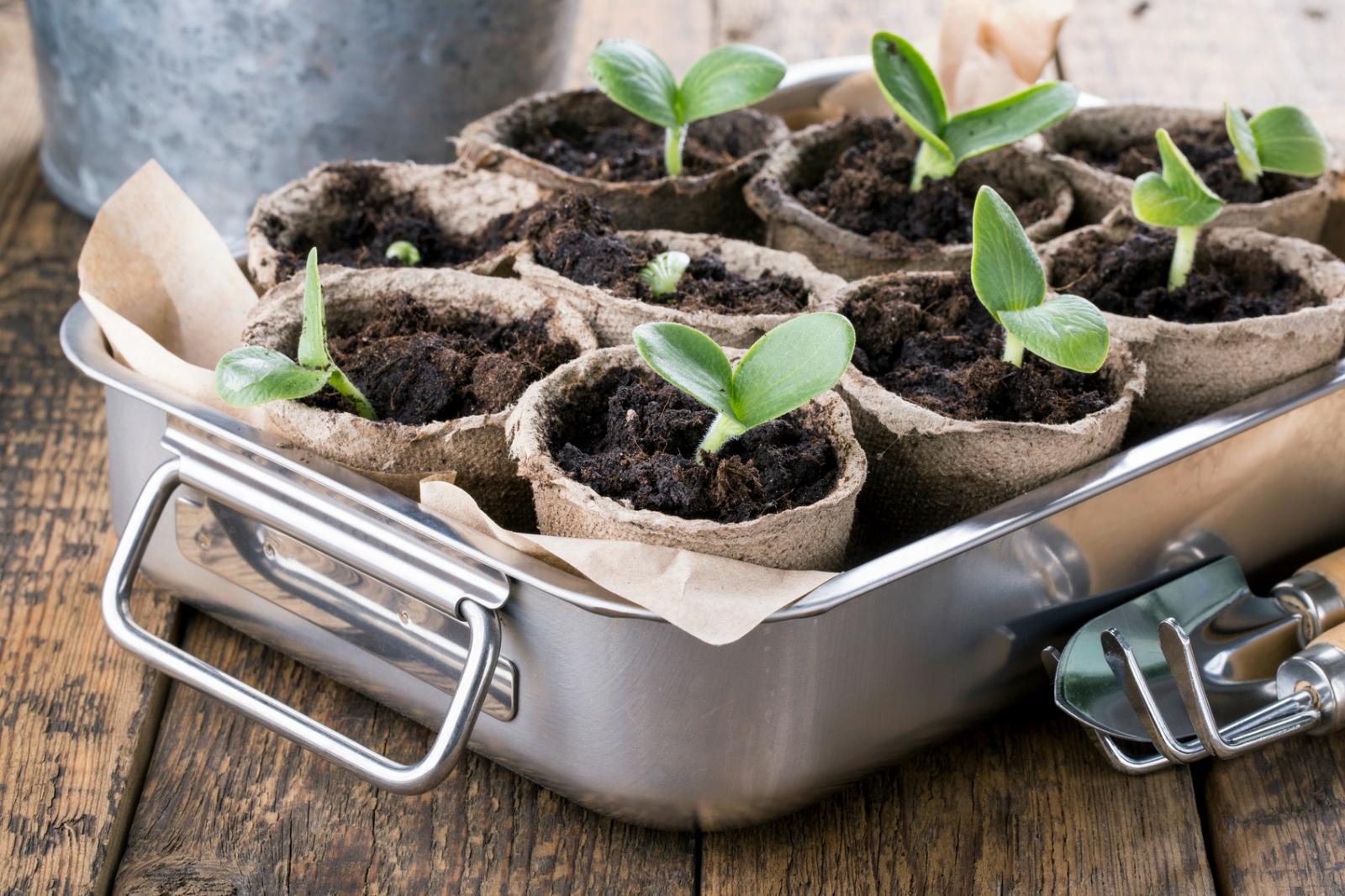 C Mo Cultivar Tu Propia Verdura Ecol Gica Ingredientes Que Suman ~ Como Hacer Una Huerta Ecologica