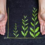 Economia ética: cómo lograr una red sostenible y creativa