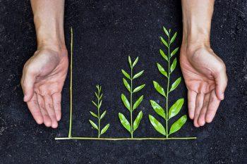 red-sostenible-y-creativa