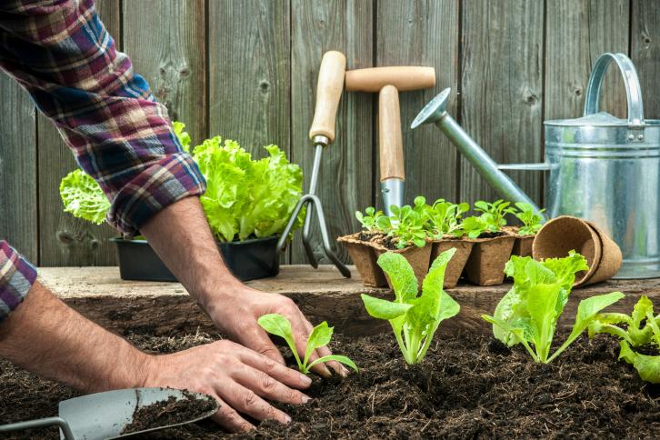 """""""cultivar-verdura-ecologica-en-casa"""""""