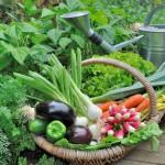 4 formas en las que los alimentos orgánicos cuidan el medio ambiente