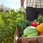 Los beneficios del cultivo ecológico