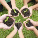 ¿Cuáles son los principios y valores de la ecología social?