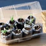 Invernaderos y semilleros caseros con materiales reciclados