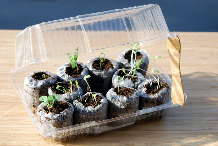 Invernaderos y semilleros caseros con materiales for Materiales para un vivero