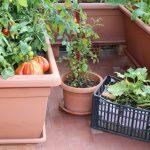Huerto ecológico en casa, una opción para el autoconsumo