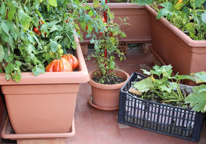 Huerto Ecológico En Casa Una Opción Para El Autoconsumo Ingredientes Que Suman