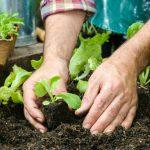 Qué plantar en primavera en nuestro huerto urbano
