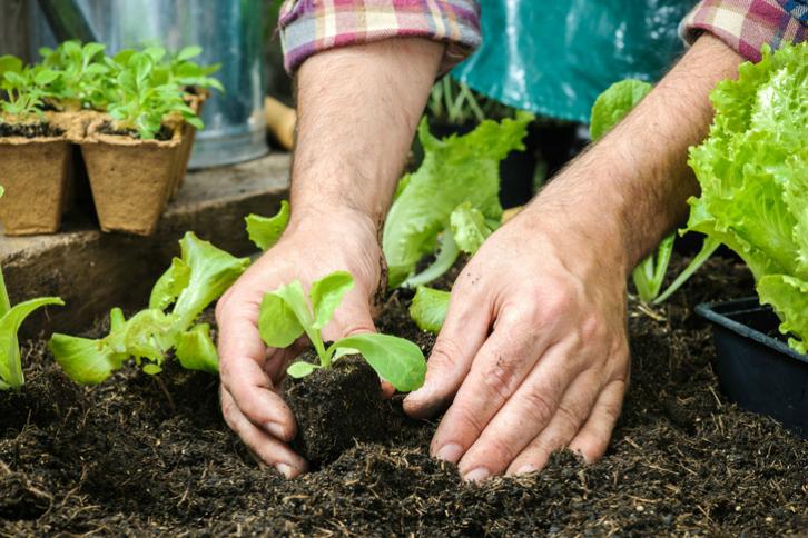 Qué plantar en primavera en nuestro huerto urbano | Ingredientes que ...
