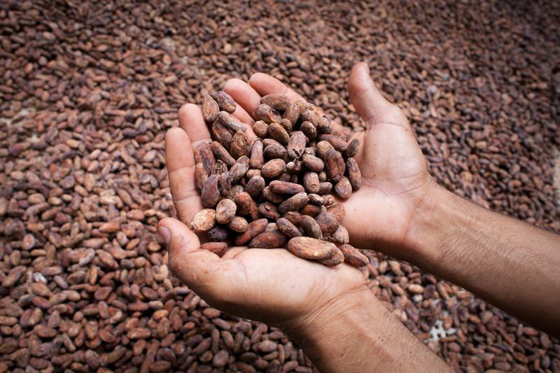 """""""granos-de-cacao-secados"""""""