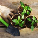 Plantas de huerto fáciles de cultivar en casa