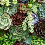 ¿Cómo hacer un jardín vertical en casa? ¡Descúbrelo aquí!