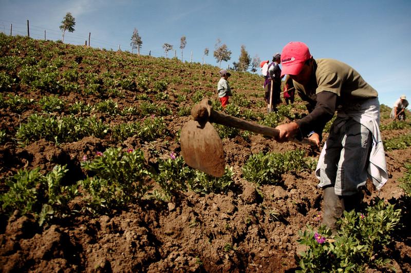 """gestion-igualitaria-del-agua-de-cultivo"""