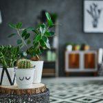 Plantas de interior resistentes para llenar de frescura tu hogar