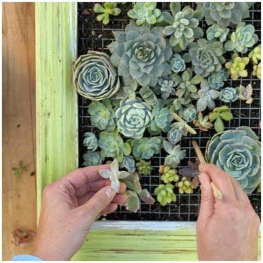 """""""reutilizar-materiales-para-elaborar-jardin-vertical"""""""