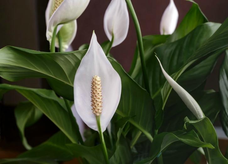 Plantas de interior resistentes para llenar de frescura tu hogar ingredientes que suman - Tipo de plantas de interior ...