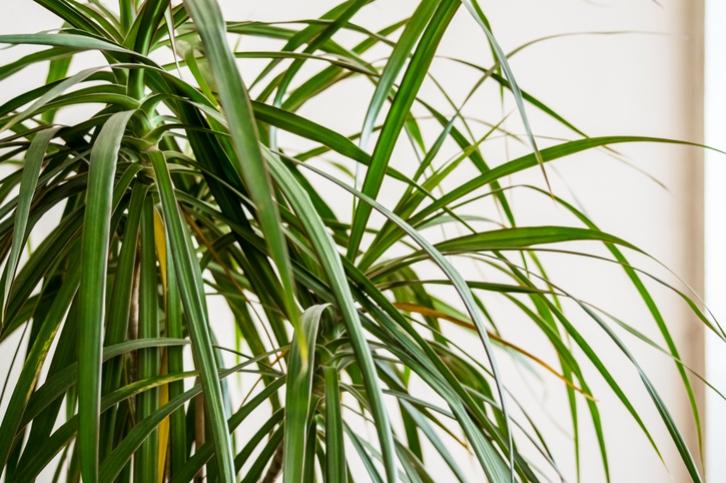 Plantas De Interior Resistentes Para Llenar De Frescura Tu Hogar - Plantas-de-interior-resistentes